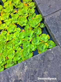 green pool corner