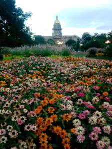 rainbow of flowers capitol building